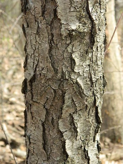 bark at somerset - Copy