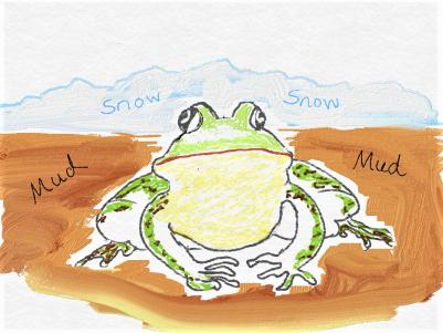frog hibernating in mud