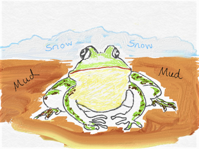 frog hibernating in mud
