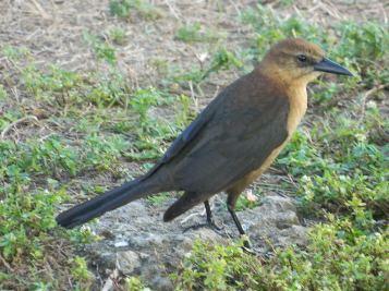 A bird in Florida