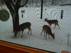 Those aren't birds at the feeder!