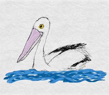 FreshPaint-41-2017.11.15-04.14.44 austrailian pelican