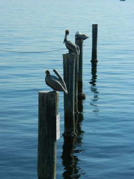 storks on water