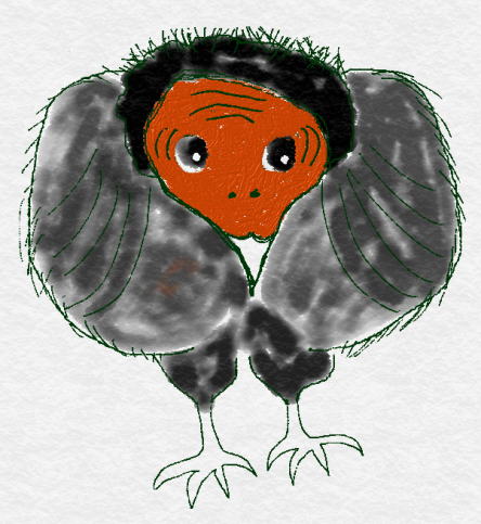 turkey buzzard drawing
