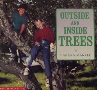 inside and outside trees