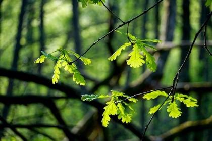 leaf-3335211_640