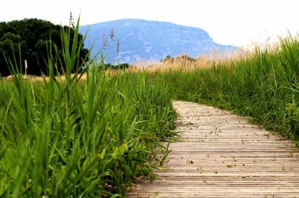 meadow-3418064_640