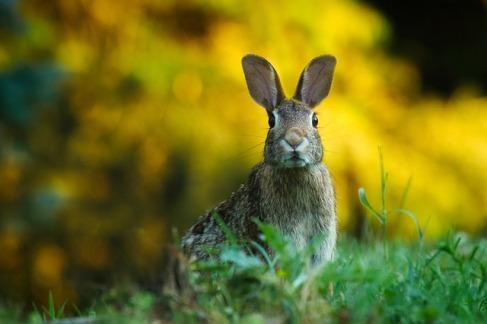 rabbit-1882699_640 (2)