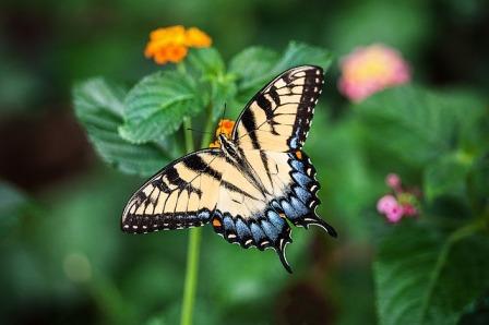 butterfly-1391809_640