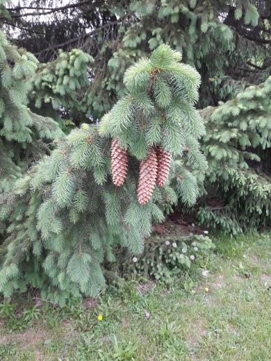 cones on walk