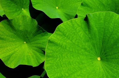 leaf-1556769_640