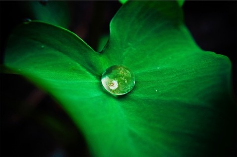 leaf with water droplet on it