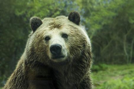 bear-1245807_640