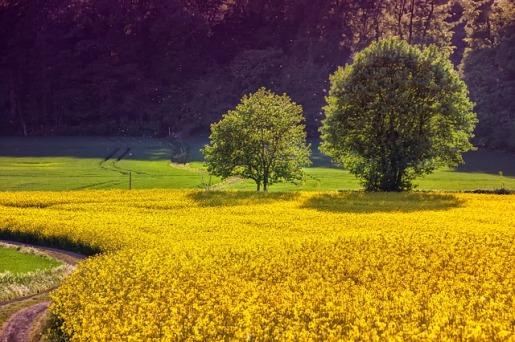 landscape-3427990_640