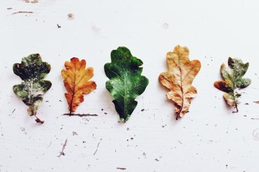 leaves-970188_640