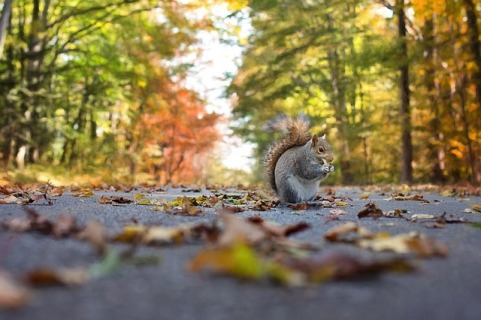 squirrel-1004893_640