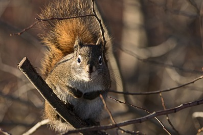 squirrel-3673849_640