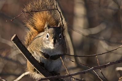 squirrel-3673849_640