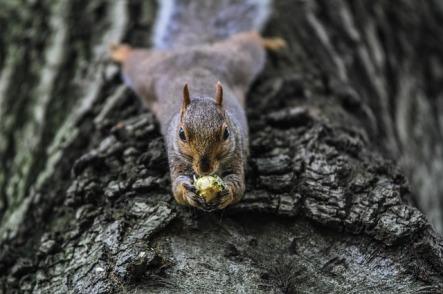 squirrel pixabay 2
