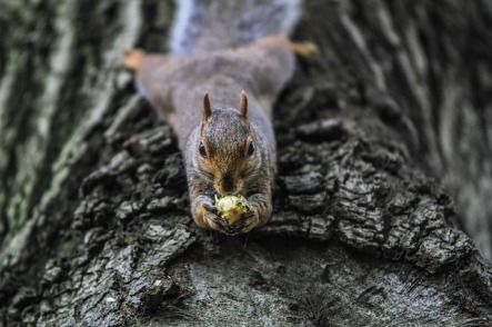 squirrel pixabay 2