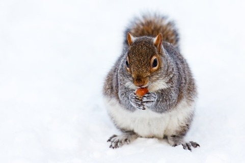 squirrel pixabay