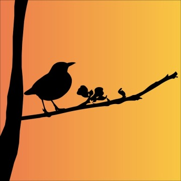 blackbird-163503_640