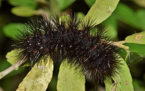 caterpillar-1572858_640