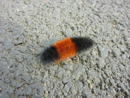 caterpillar-264825_640