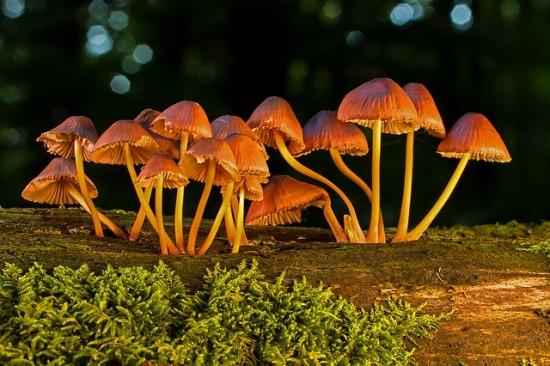 mushroom-3661678_640