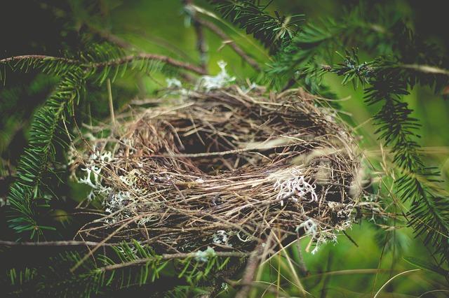 nest-918898_640