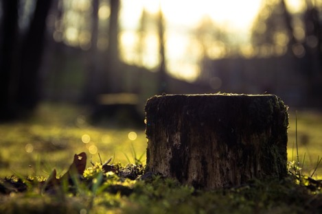 stump-933702_640