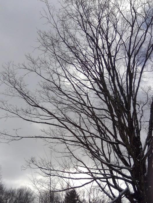 branching pattern