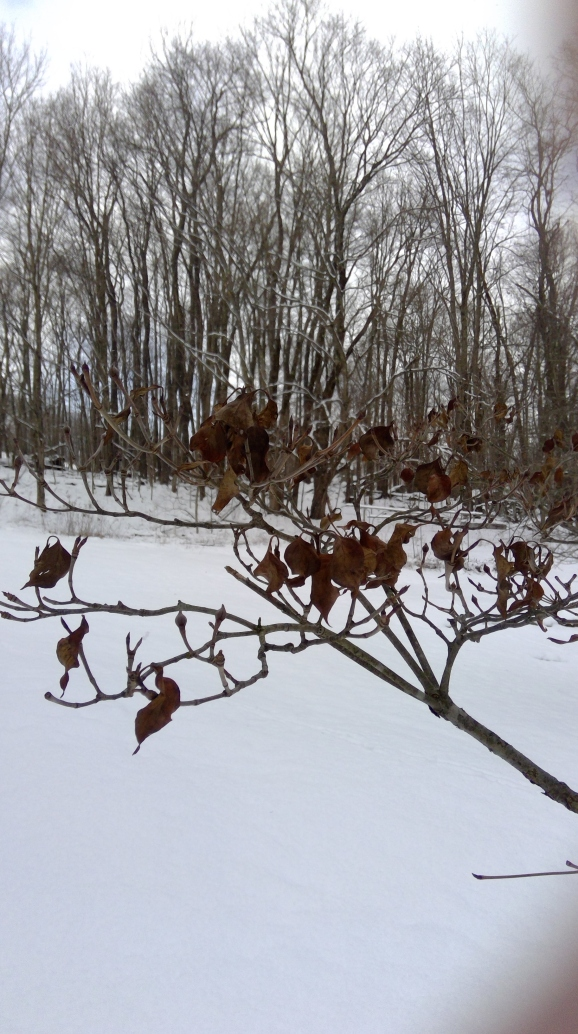 leaves on trees 2