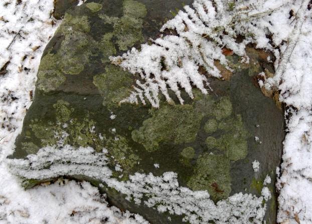 lichens on boulder 2
