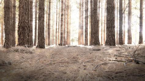 woods-841417_640